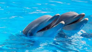 dolphins-for-kids