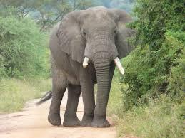 elephants-for-kids