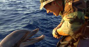 friendly-dolphin