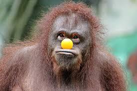 funny-gorilla