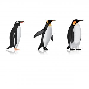 killer-whales-eat-penguins