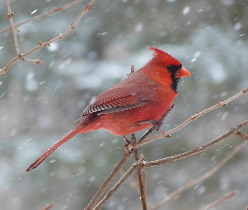 cardinal-facts
