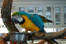 macaw-eating