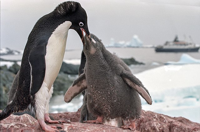 Penguin with Chick