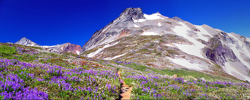 Alpine tundra in the North Cascades of Washington