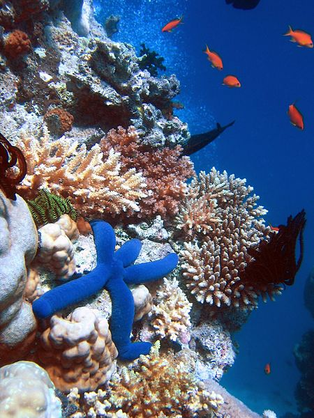 Biodiversity of a coral reef