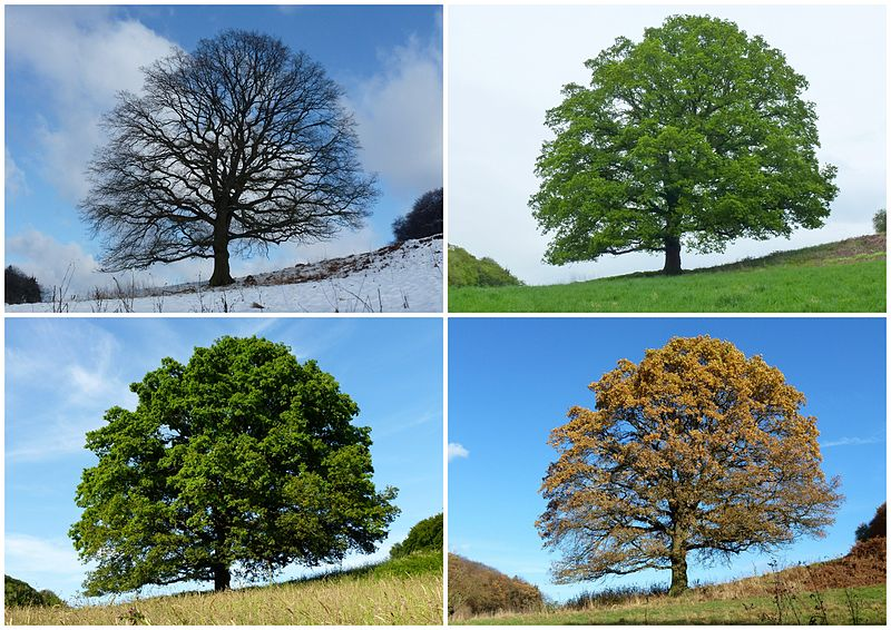 Four temperate and subpolar seasons Winter, Spring Summer, Autumn(Fall)