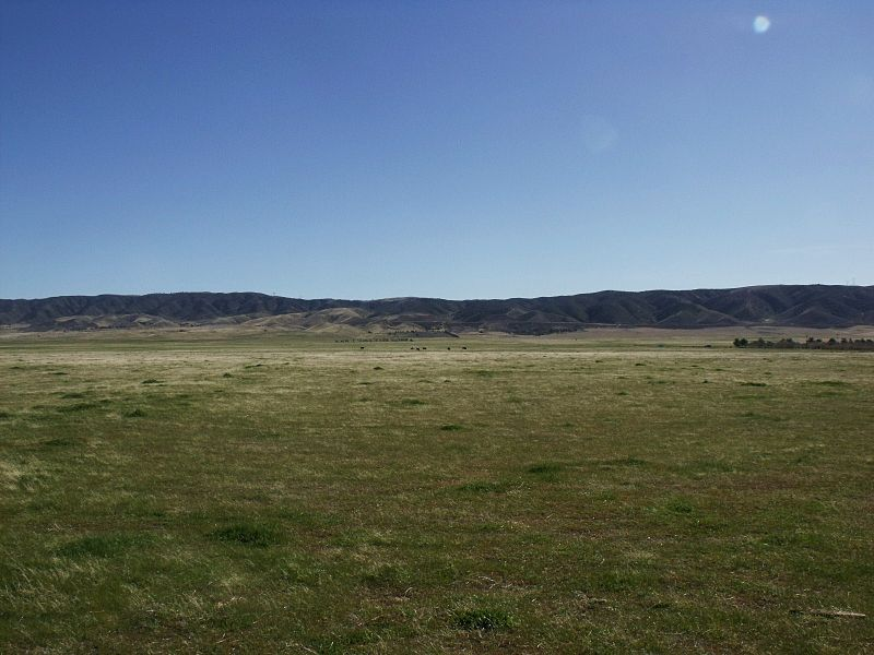 Grassland in the Antelope Valley, California