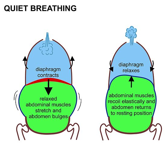 Quite Breathing