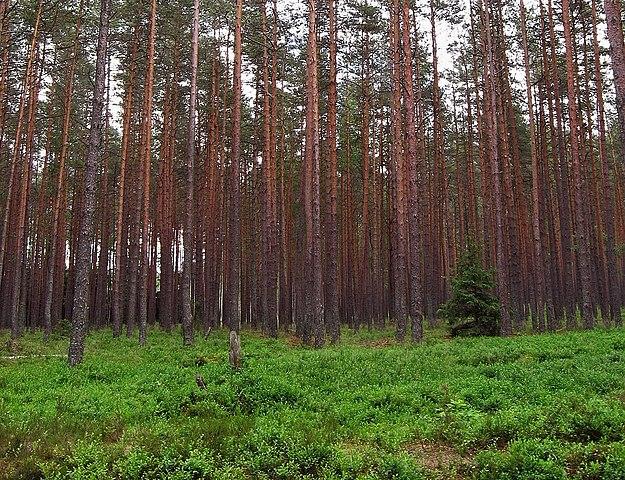 Temperate coniferous forest